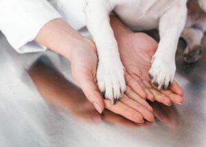 treating-dog-hygroma