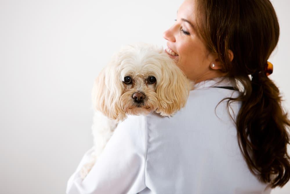 Veterinarian treating dog depression