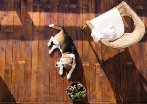 causes of hygromas on dogs