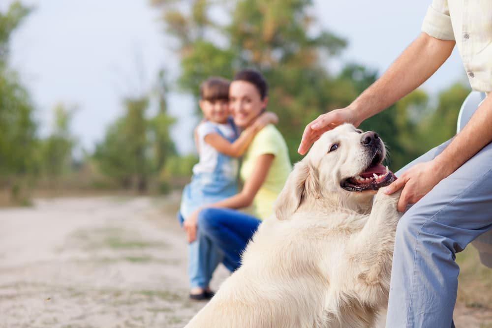 Family playing with family dog