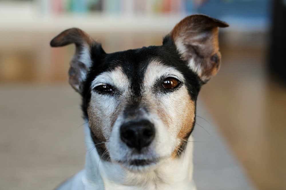 causes of seizures in dogs