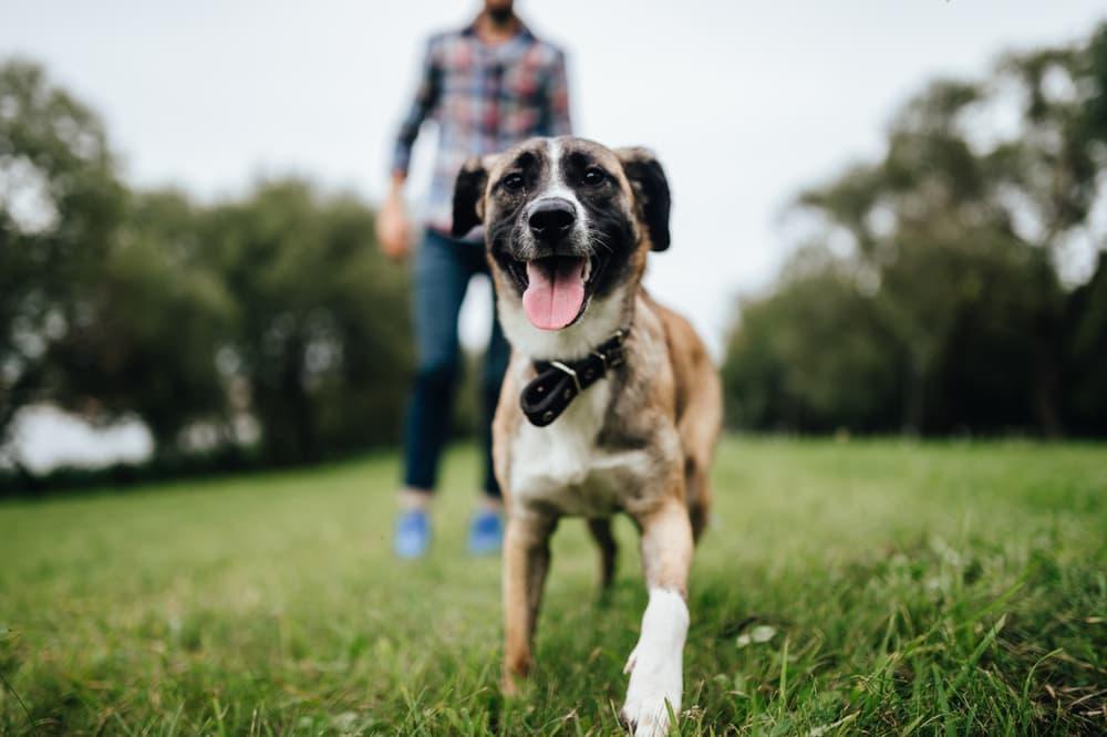 Dog plays at park