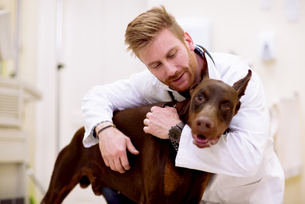 Veterinarian hugging dog