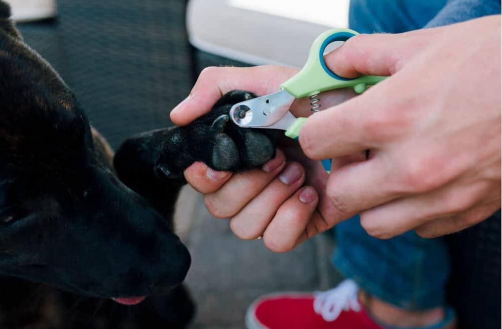 Zen Clipper dog nail clippers