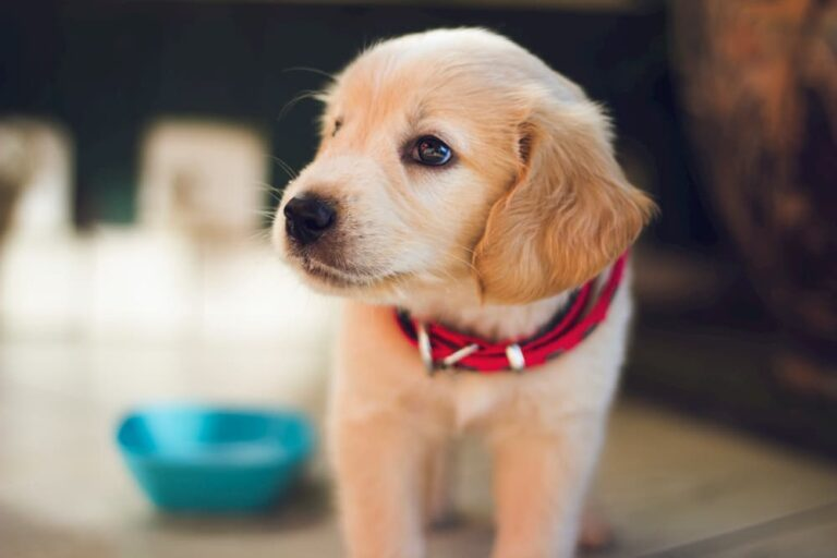 cute puppy by food bowl