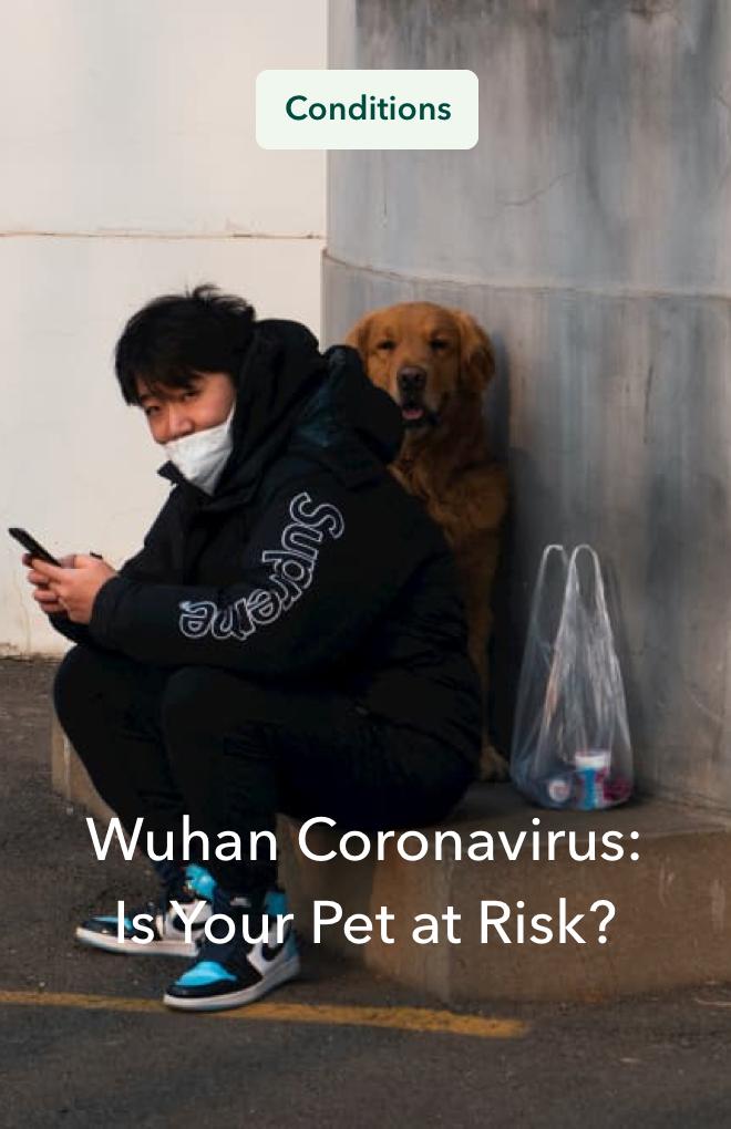 Coronavirus: Is Your Pet at Risk?
