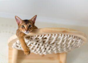 Cat on hammock in house