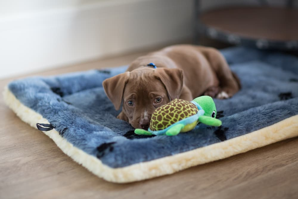 Puppy lying on dog bed