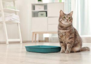 Cat sitting next to litter box