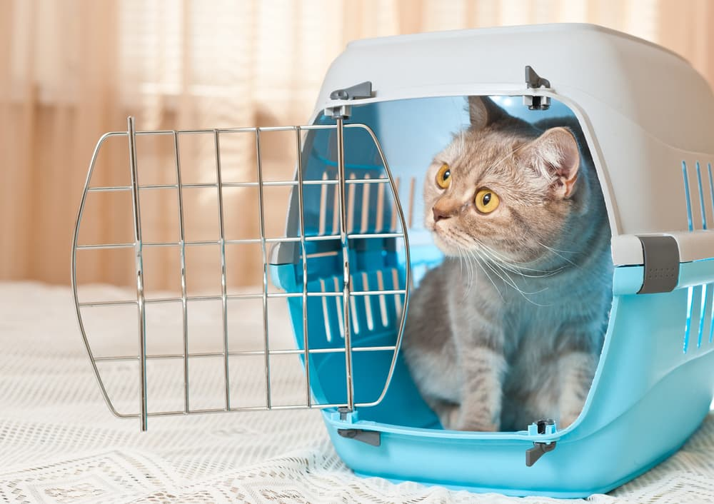 Cat in travel crate