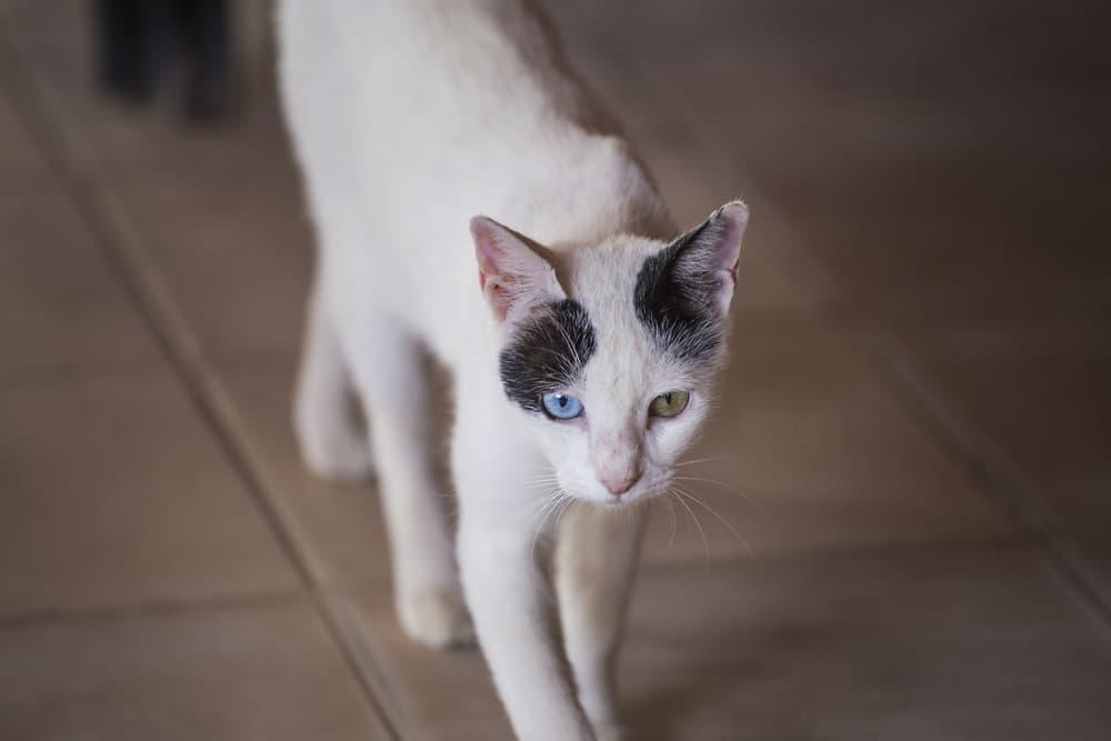 Underweight cat