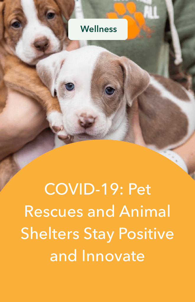 COVID-19: Pet Rescues and Animal Shelters Stay Positive and Innovate
