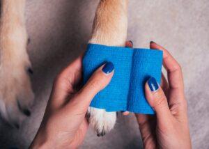 pet owner bandages dog's paw