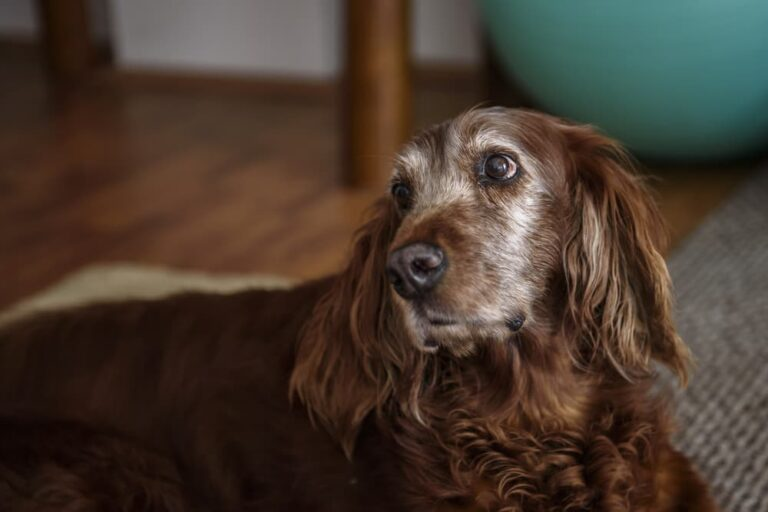 Dog looking sideways to camera