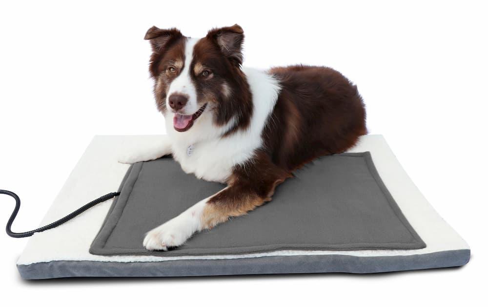 dog on heated pet mat