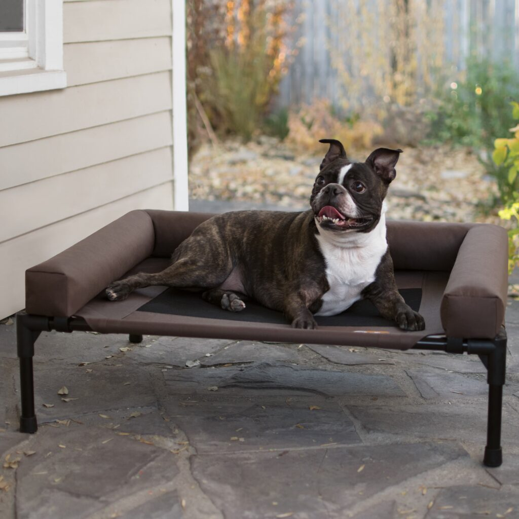 dog on comfy outdoor dog bed