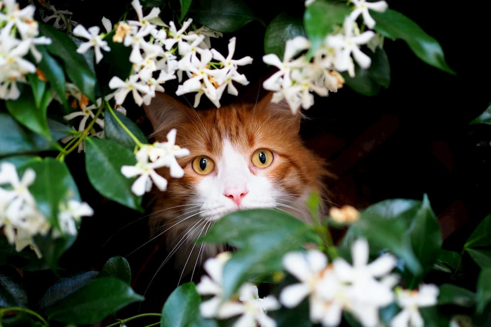 10 Flowers That Are Poisonous to Cats