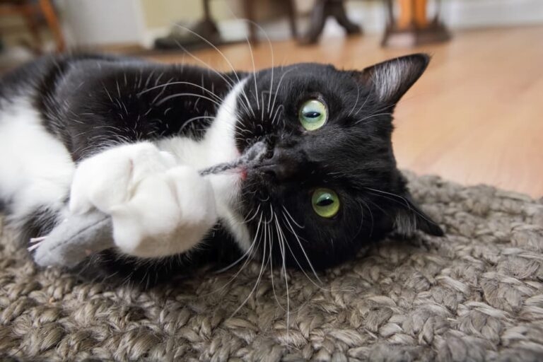 cat playing with catnip toy