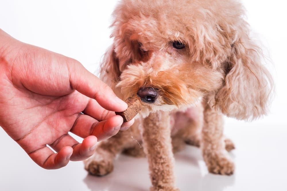 Giving dog heartworm medication
