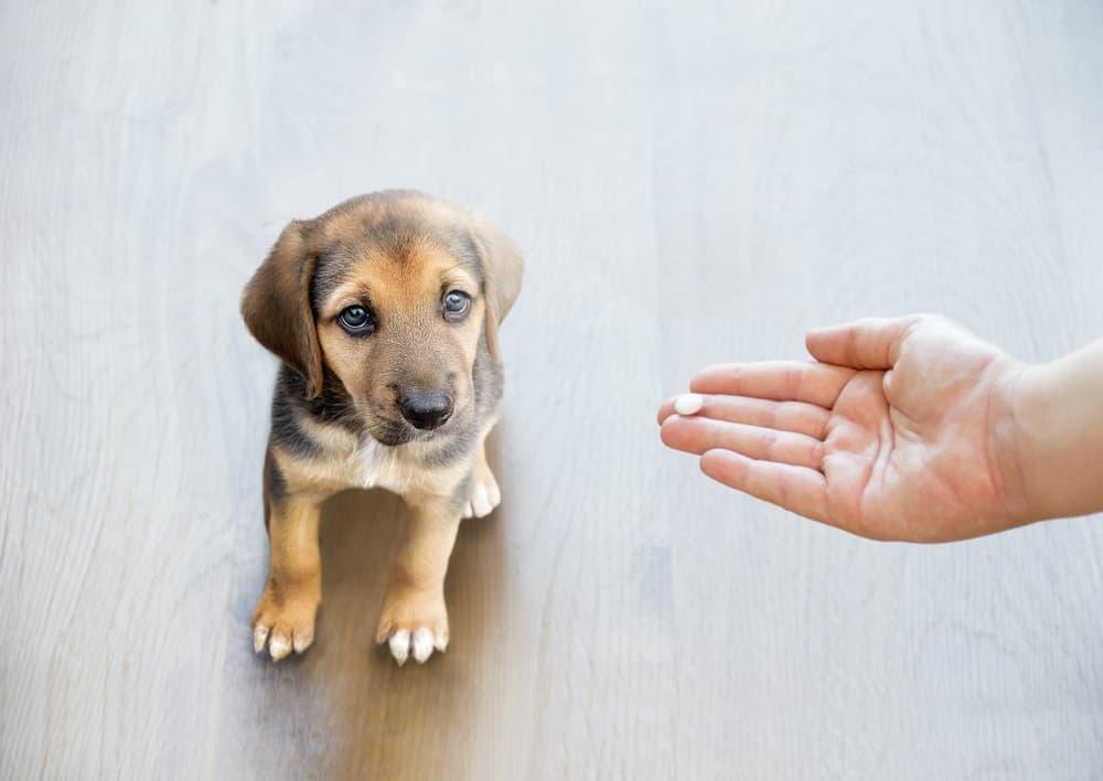 Pet owner giving dog medication