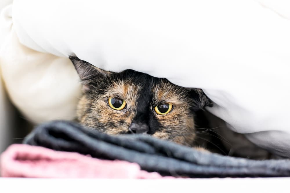 8 Unexpected Things That May Stress Your Cat Out » Saint Francis Veterinary  Center of South Jersey
