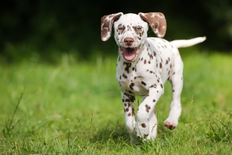 Dog running outside in the grass
