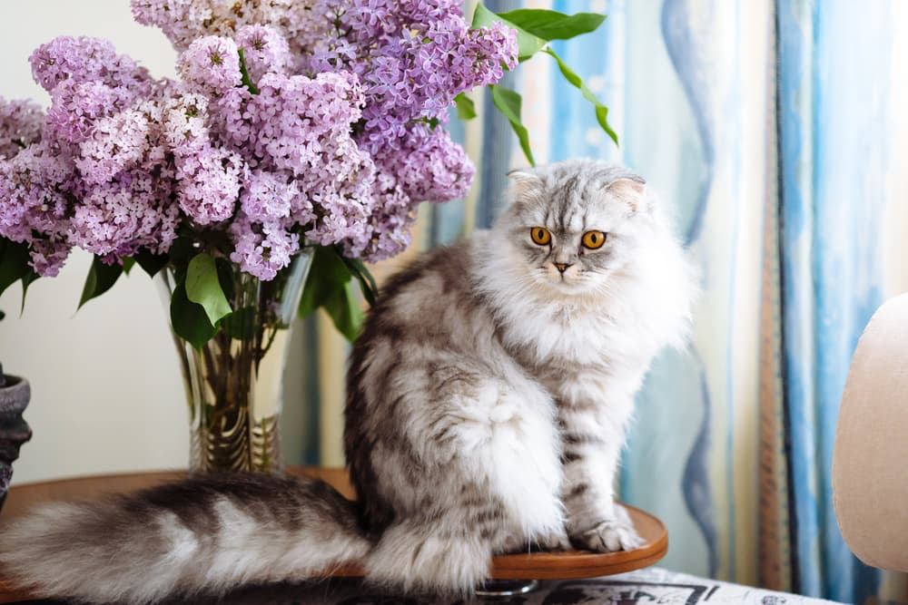 cat with lilac flowers