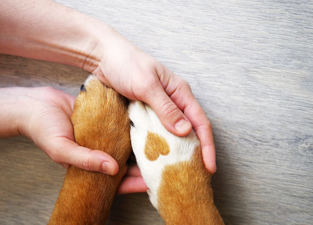 Woman holding dog's paws