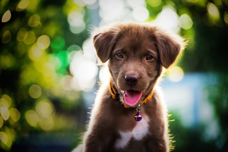 Puppy outside by trees
