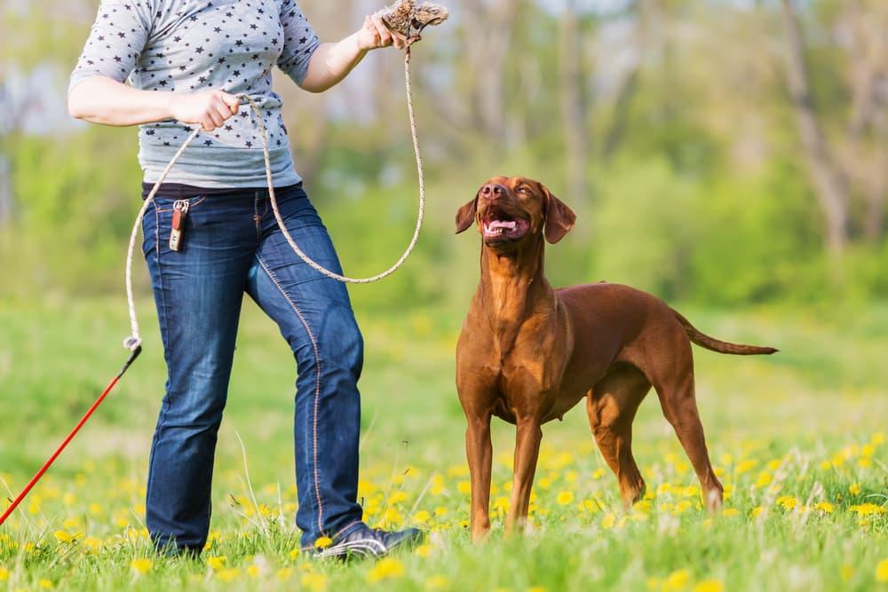 dog-flirt-pole