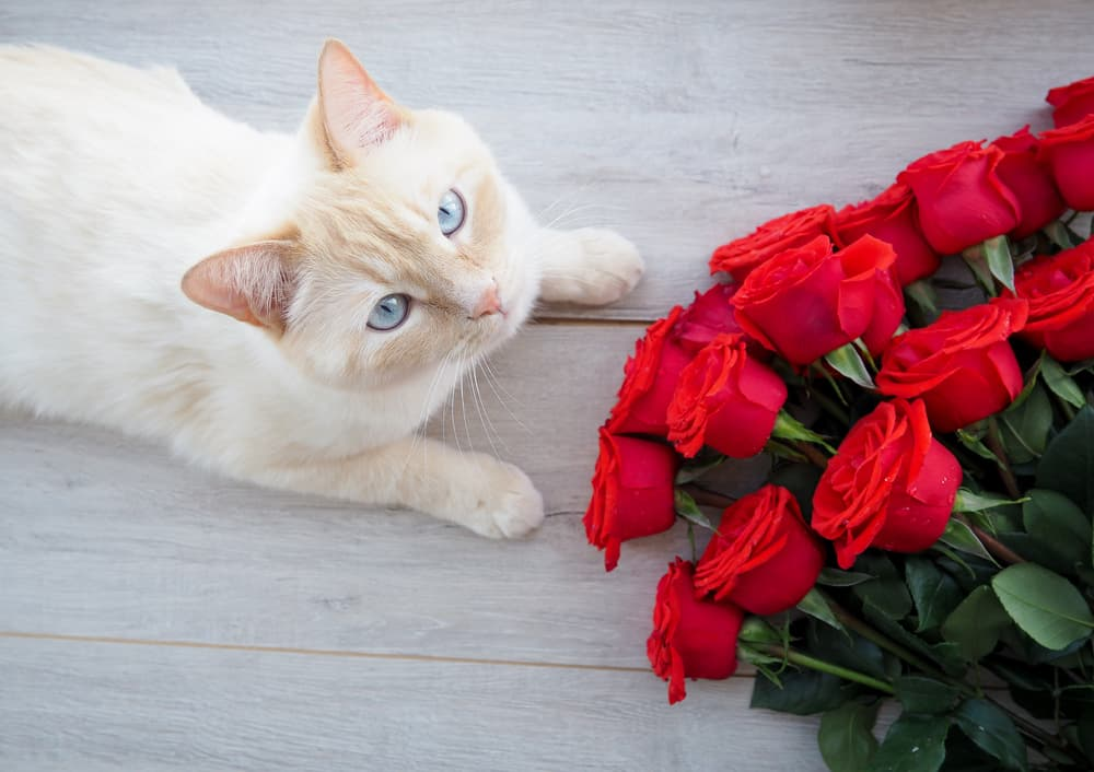 Cat next to roses