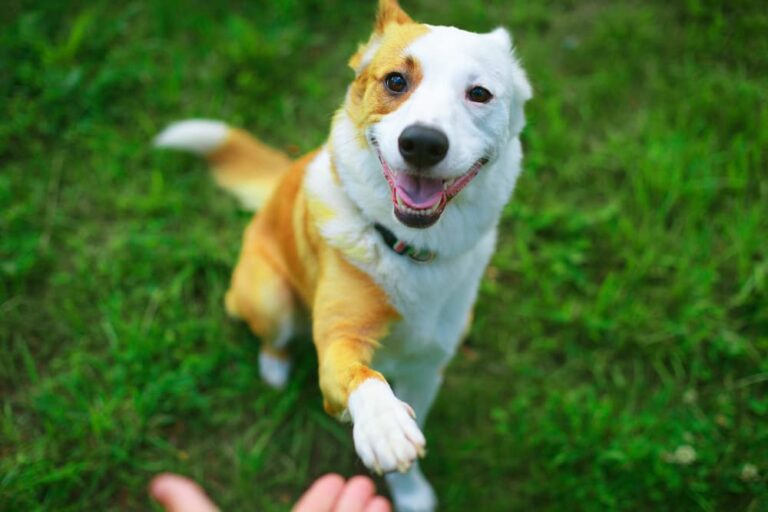 Dog showing his paw