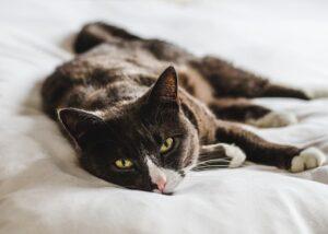 Cat showing symptoms of diarrhea