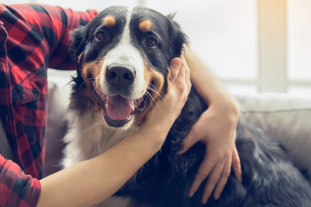 man with arms around dog