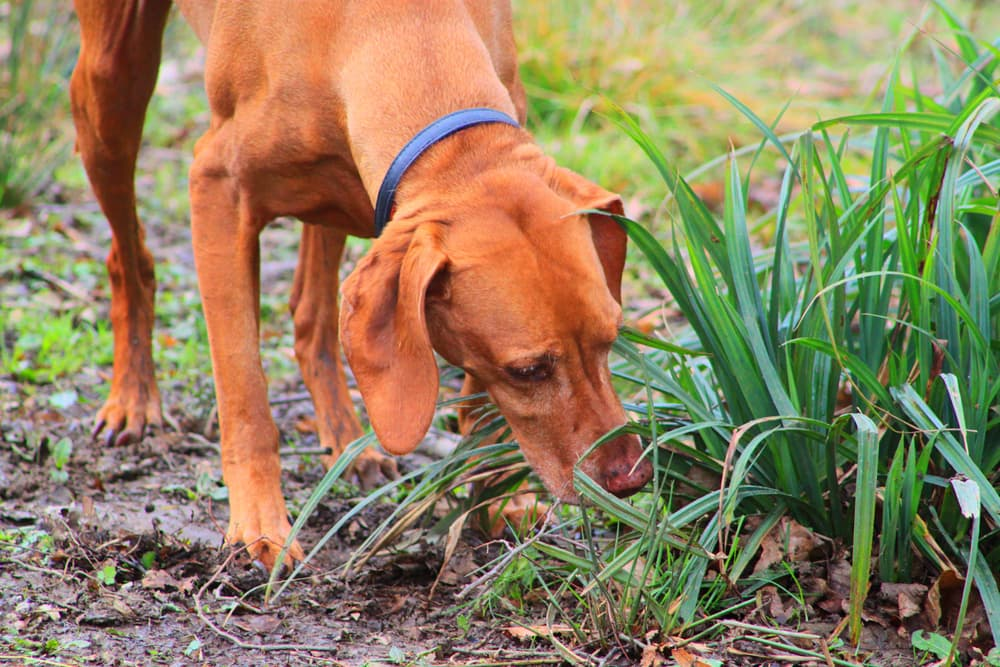 dog sniffs in garden