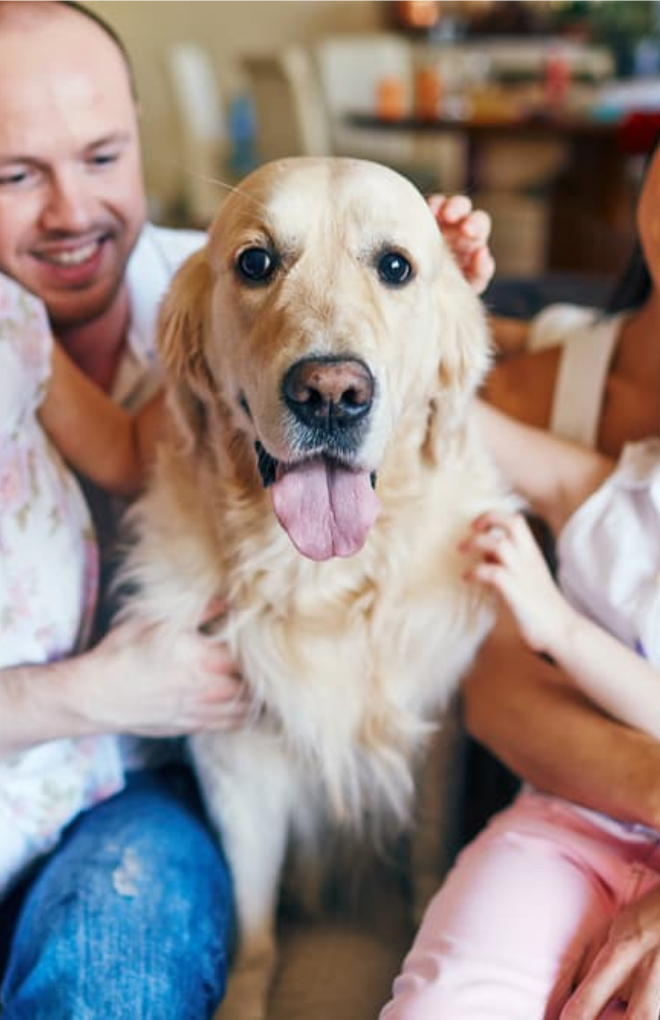 10 Questions about COVID-19 and Pets—Answered