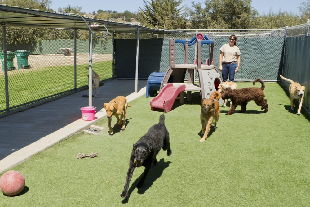 Dogs exercising in a kennel