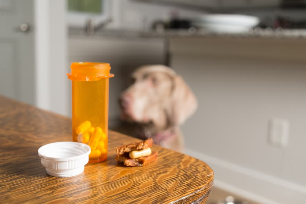 Antibiotic bottle with dog blurred in the background