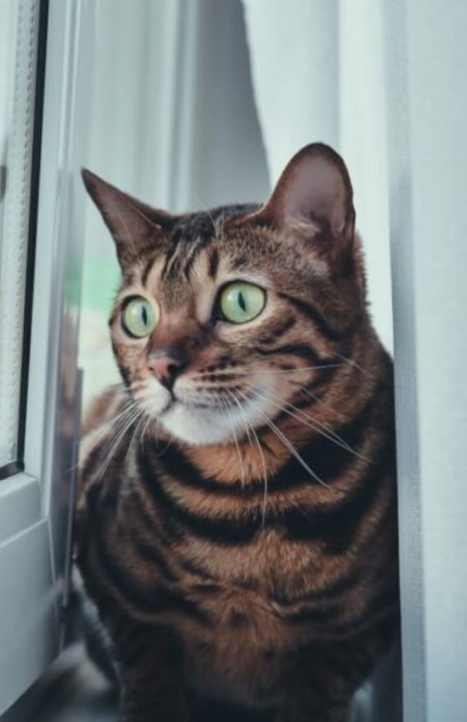 8 Surprising Things That Stress Cats Out