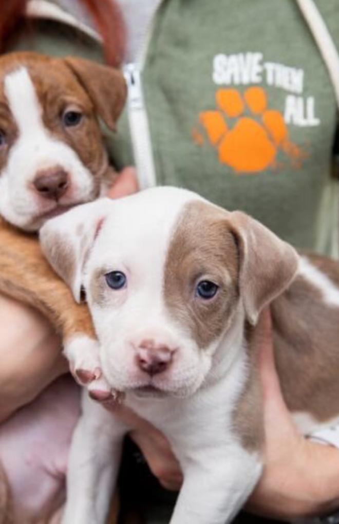 COVID-19: Les sauvetages d'animaux et les refuges pour animaux restent positifs et innovent