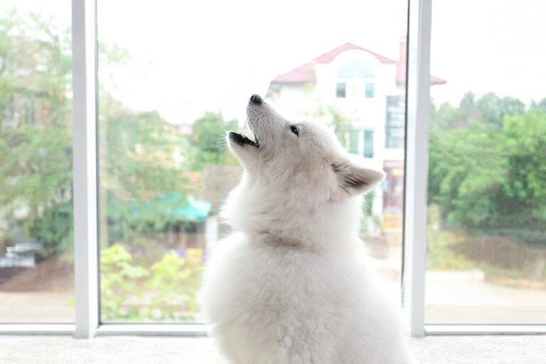 Dog by window howling