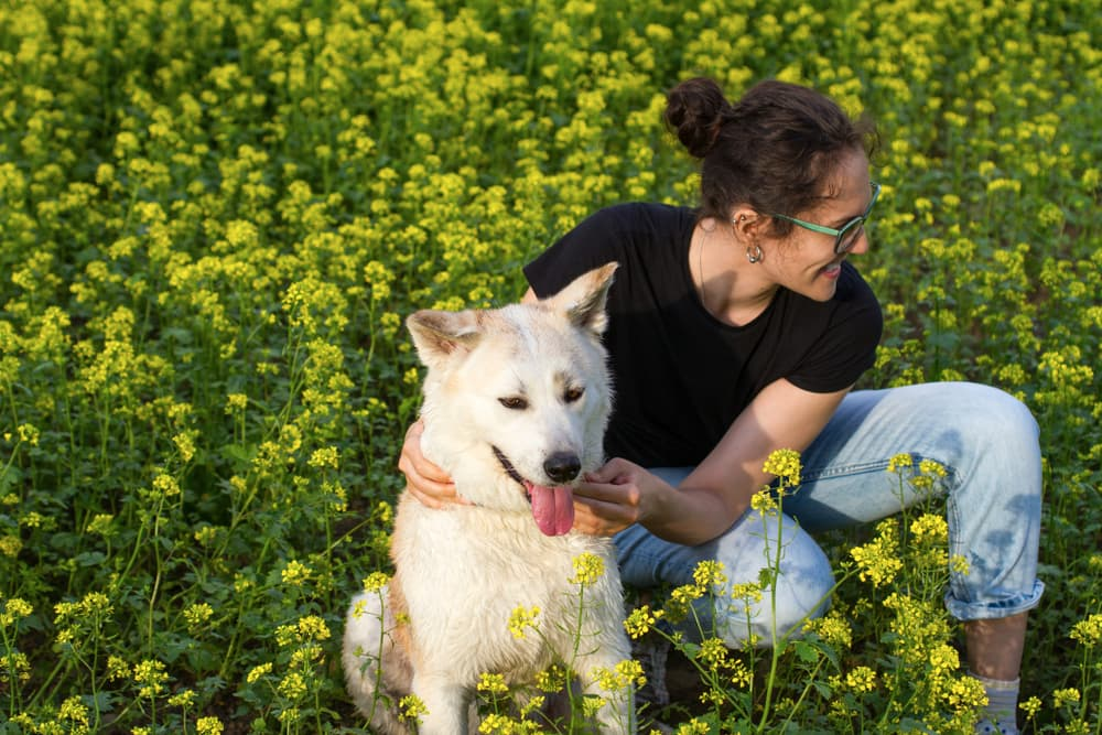 Happy dog being pet by owner in beautiful field