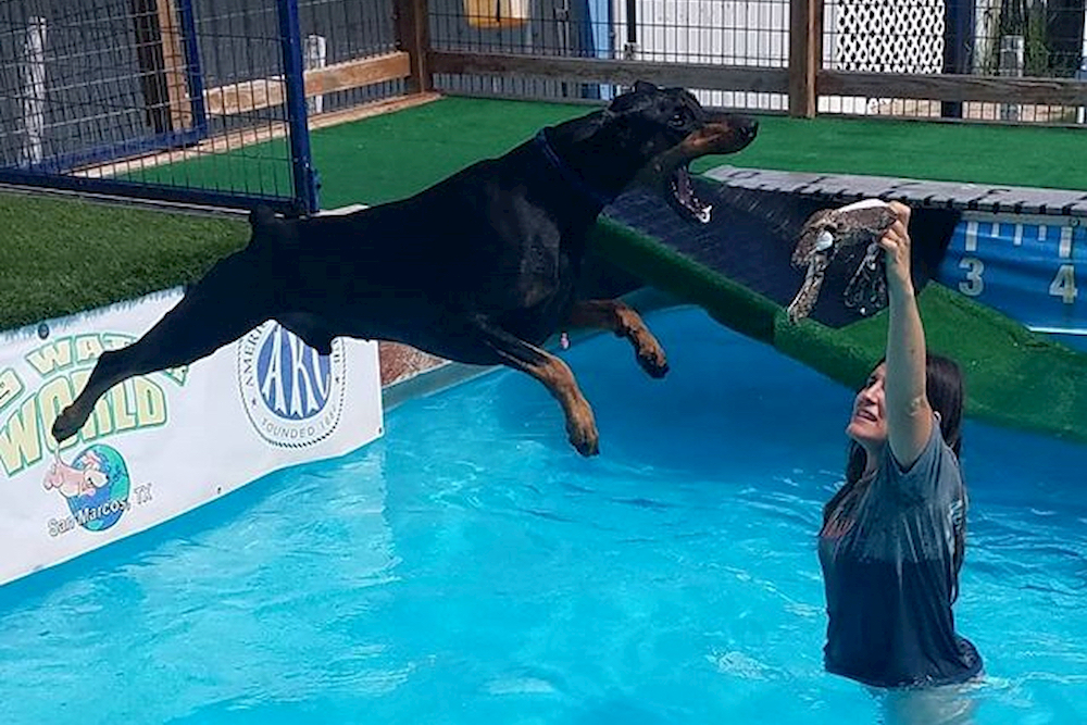 Dog jumping for something in a pool