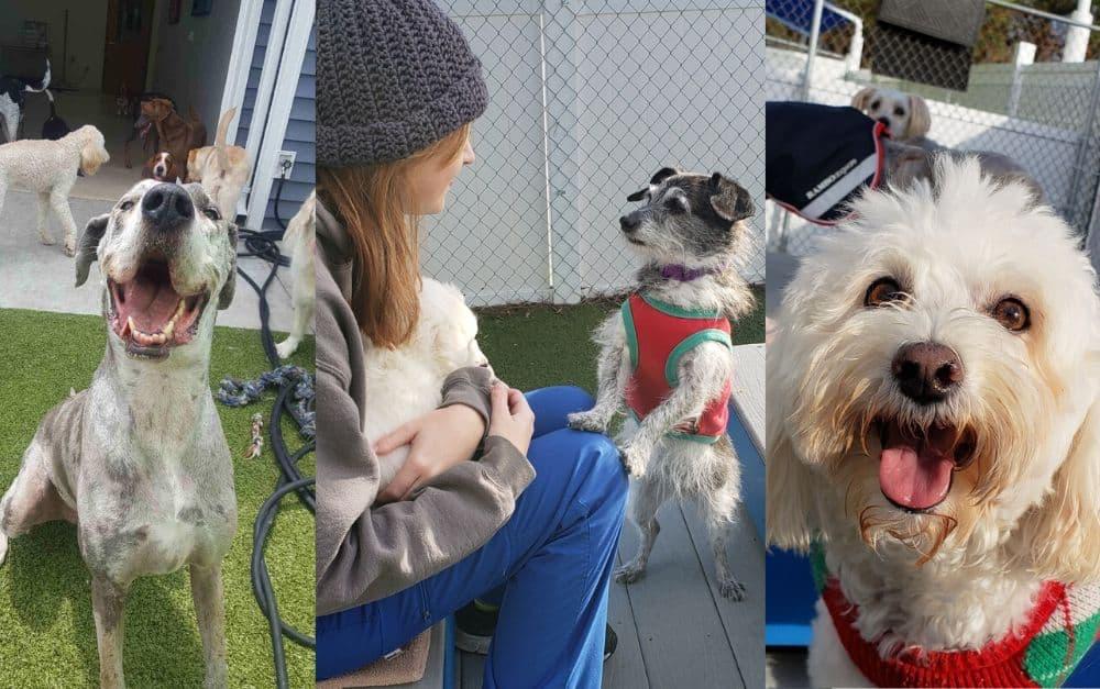Dogs at Family Vet facility