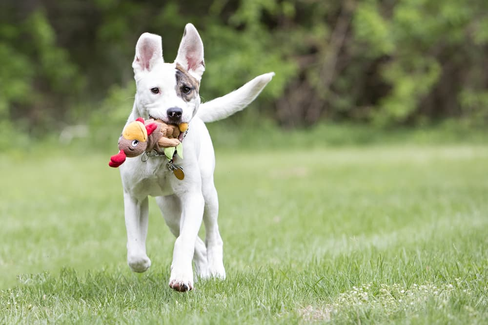 Puppy playing outdoors with toy