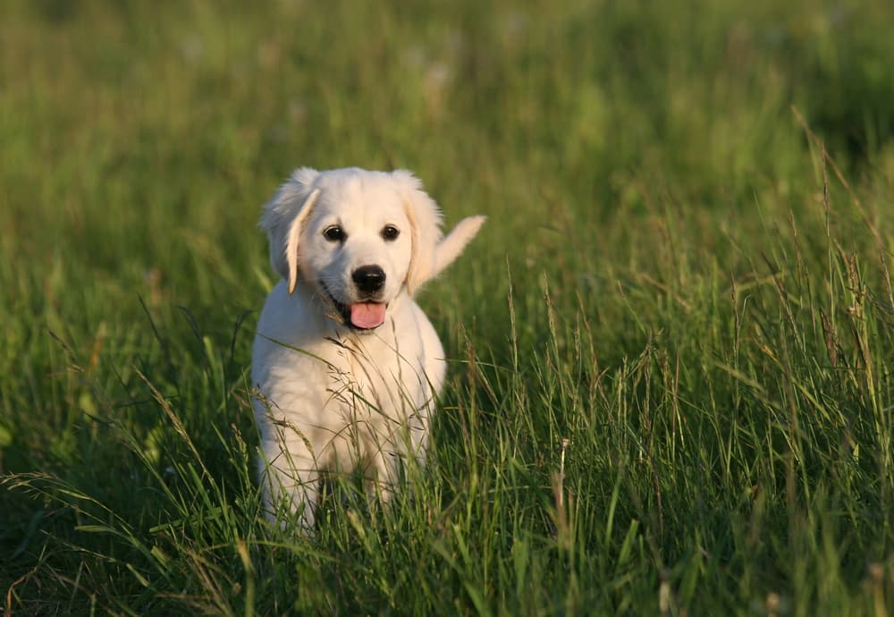 dog in high grass outside