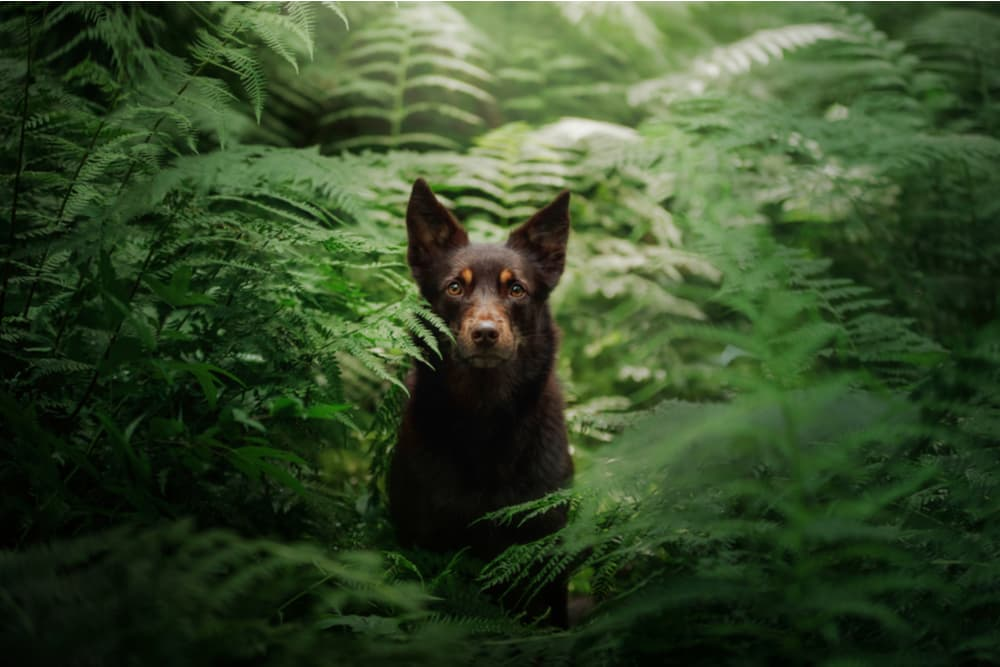 Dog deep in the forest
