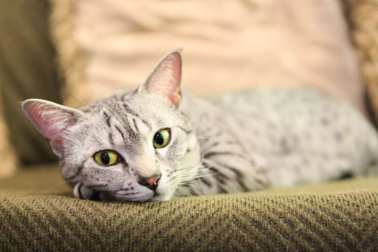 Cat looking sad lying on the couch