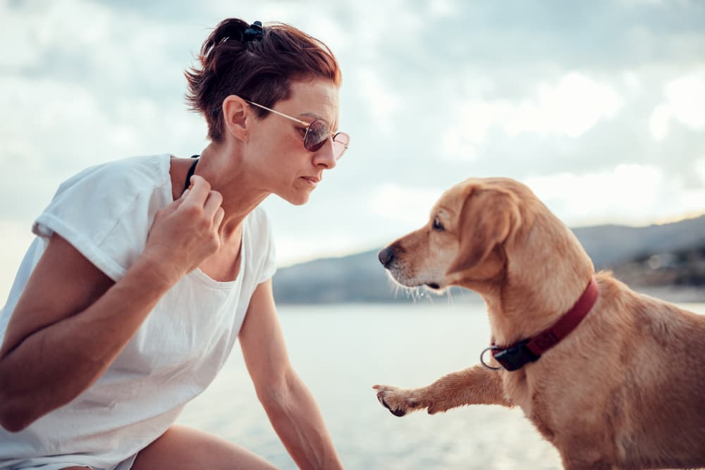 Woman giving dog treat on beach