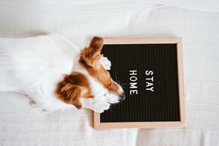 Dog by COVID-19 sign